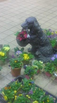 花屋の店先にて
