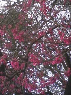 梅や桃の花咲く散歩道