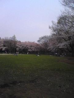 鶴間公園の桜