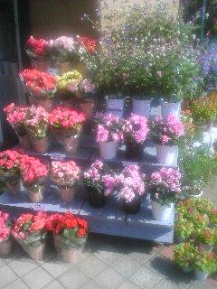 新しい花屋