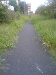 草むらの道